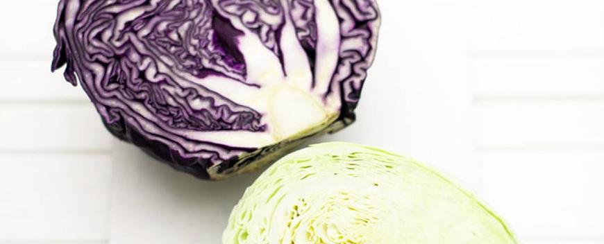 contorni insalata coleslaw a